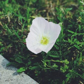 Petals by Tammie Riley